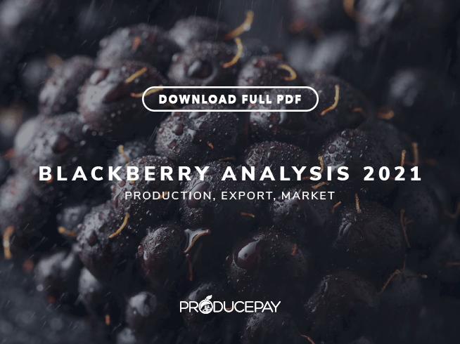 producepay-white-paper-blackberry-analysis-2021